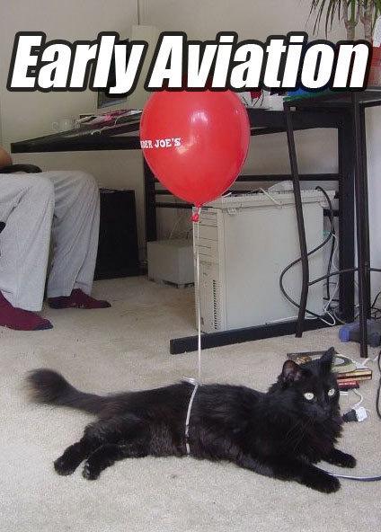 Jetset Cat